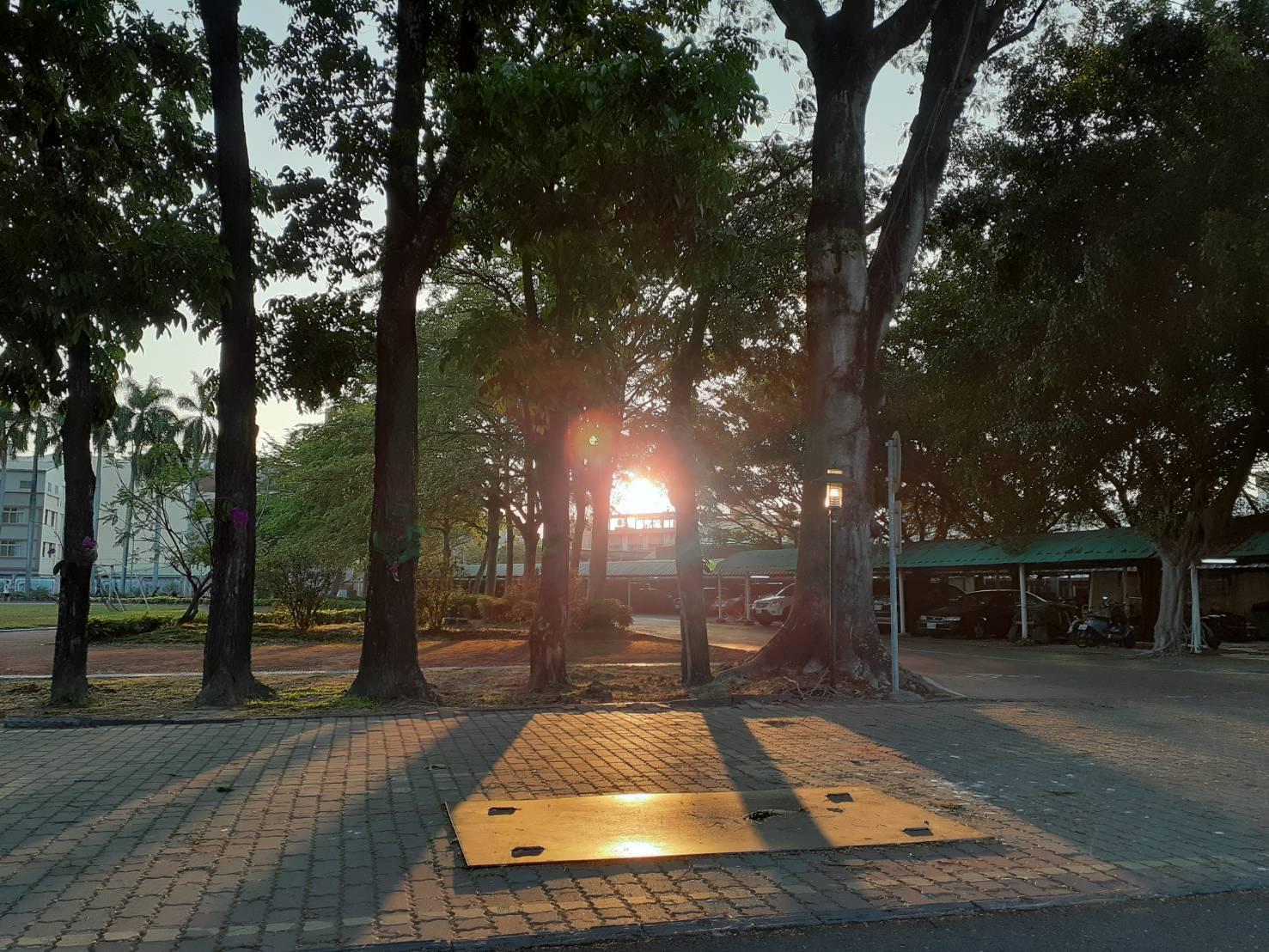 林蔭大道-夕陽